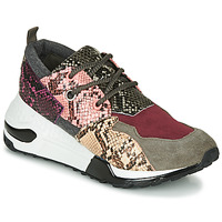 Scarpe Donna Sneakers basse Steve Madden CLIFF Multicolore
