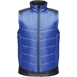 Abbigliamento Uomo Piumini Regatta  Blu reale/Blu navy