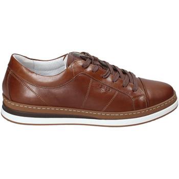 Scarpe Uomo Sneakers basse IgI&CO 3138122 Marrone