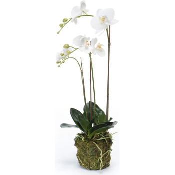 Casa Piante artificiali Emerald Orchidea Phalaenopsis Artificiale 70 cm Bianca Bianco