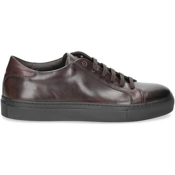 Scarpe Uomo Sneakers Corvari sneaker 1215 pelle marrone testa di moro TESTA DI MORO