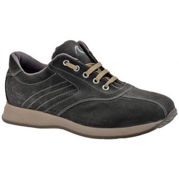 Scarpe Uomo Sneakers alte Docksteps Globe Bassa Casual grigio