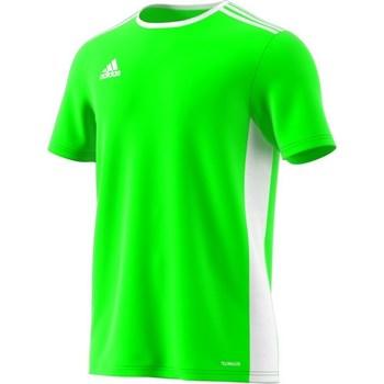 Abbigliamento Uomo T-shirt maniche corte adidas Originals Entrada 18 Verde
